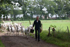 geitenboerderij-de-groote-stroe